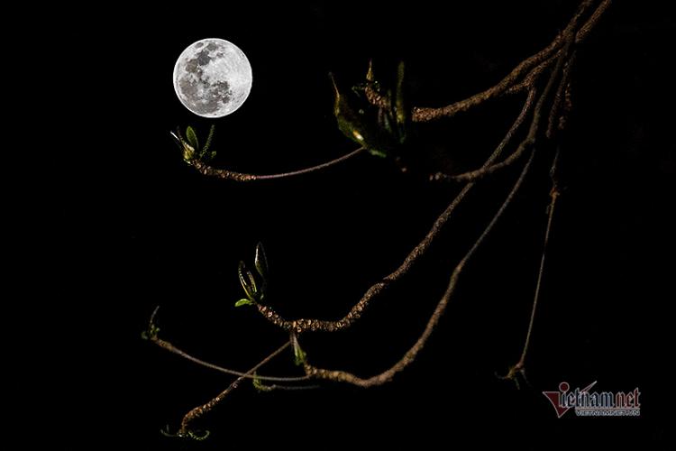 Những hình ảnh đẹp về siêu trăng trên bầu trời Hà Nội
